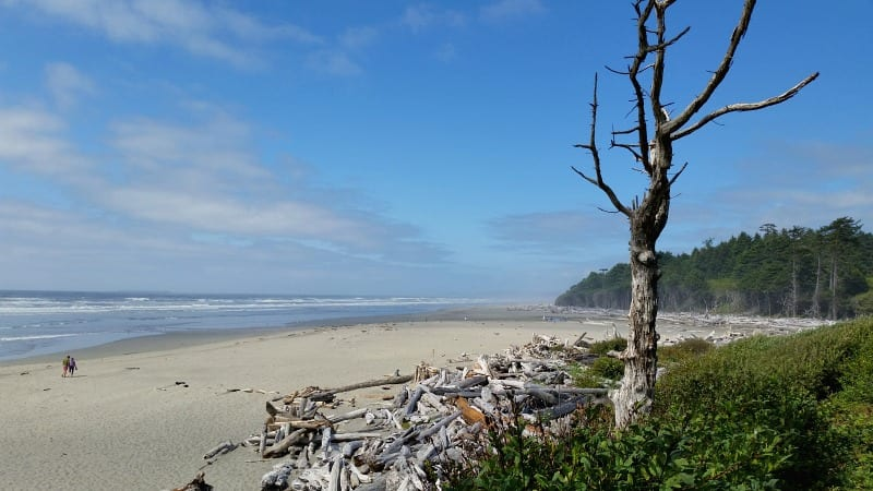 Kalaloch Beach in Olympic National Park is a family favorite with its soft sand, driftwood for building forts & opportunities for whale watching & more
