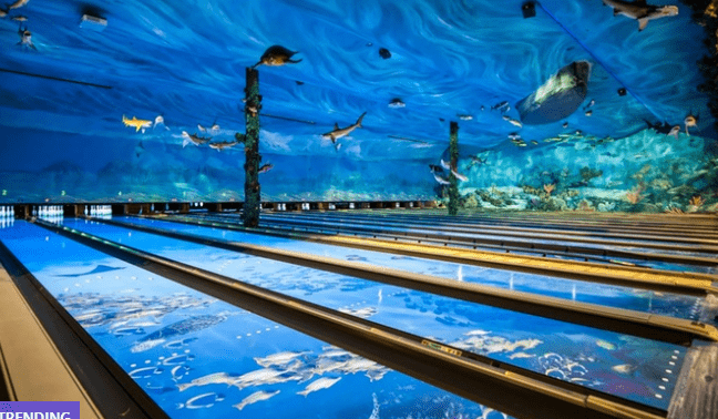 Bass Pro Shop Bowling Discount in Tacoma on Groupon – 36% Off