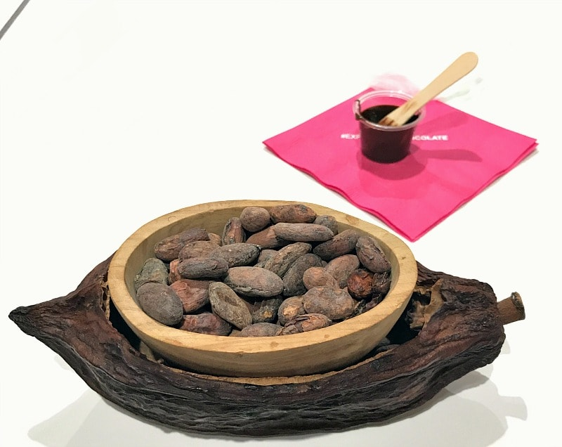 Making of chocolate from cacao plant