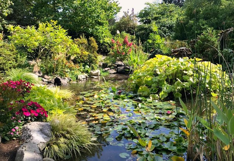 HIghline Gardens Lily Pond