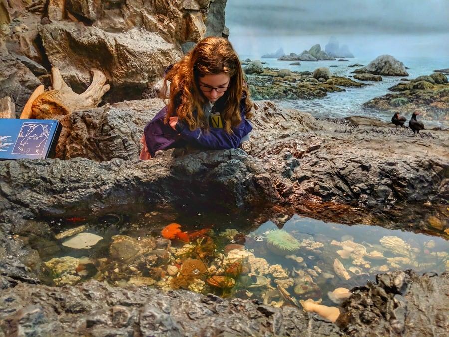 Tide Pools at Royal BC Museum