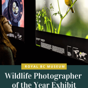 Wildlife Photographer of the Year Exhibit at Royal BC Museum