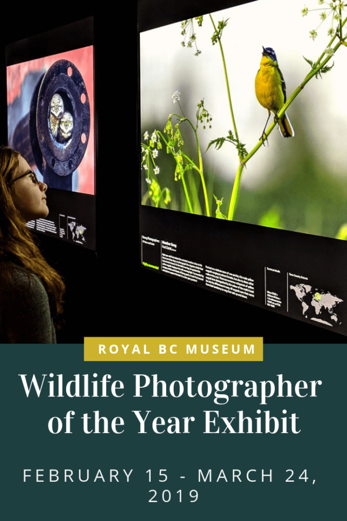 Wildlife Photographer of the Year Exhibit at the Royal BC Museum in Victoria