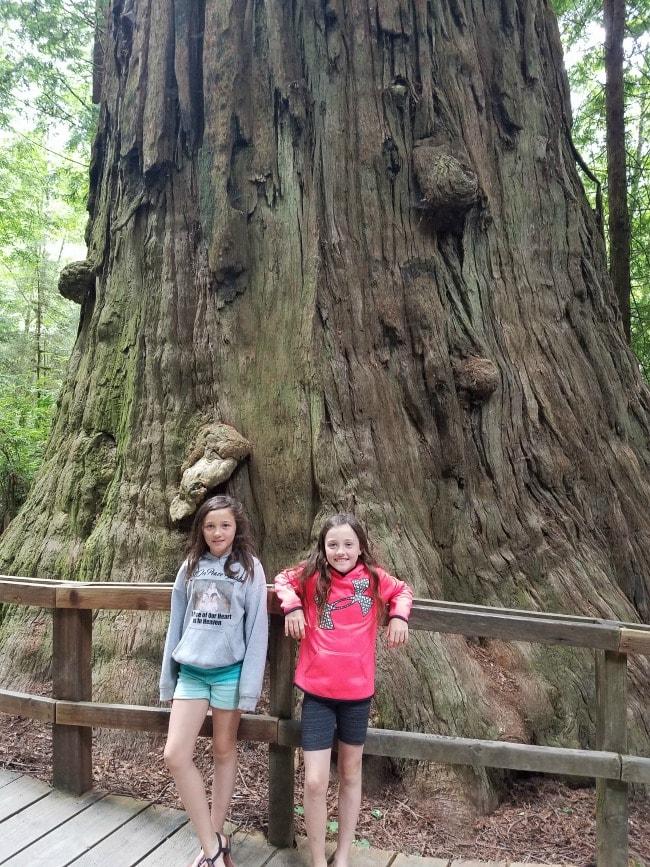 Giant Tree in Redwoods