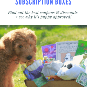 BarkBox Dog Subscription Boxes