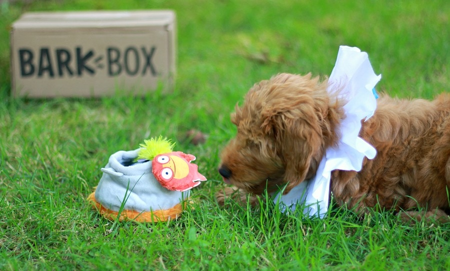 BarkBox Toys with Puppy