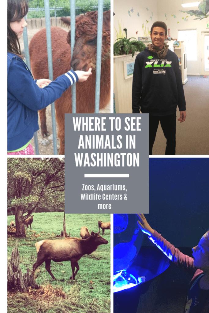 Where to See Animals in Washington (Zoos, Aquariums, Kangaroo Farms & More)!