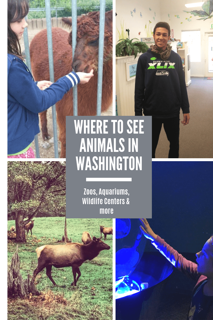 Where to See Animals in Washington