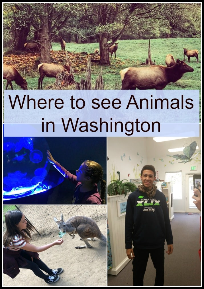 Find out where to see animals in western Washington