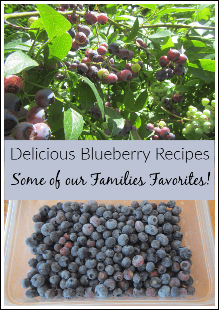 Delicious Blueberry Recipes – A Few of Our Families Favorites!