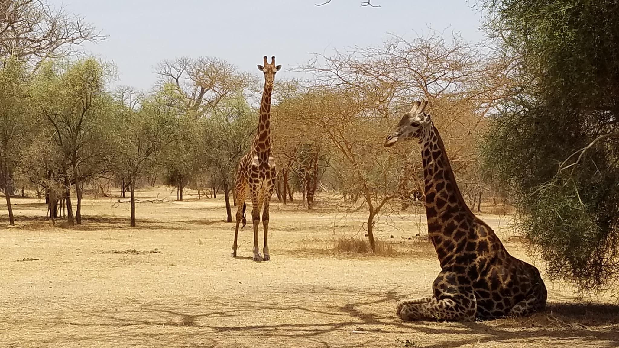 Senegal Nature Preserve