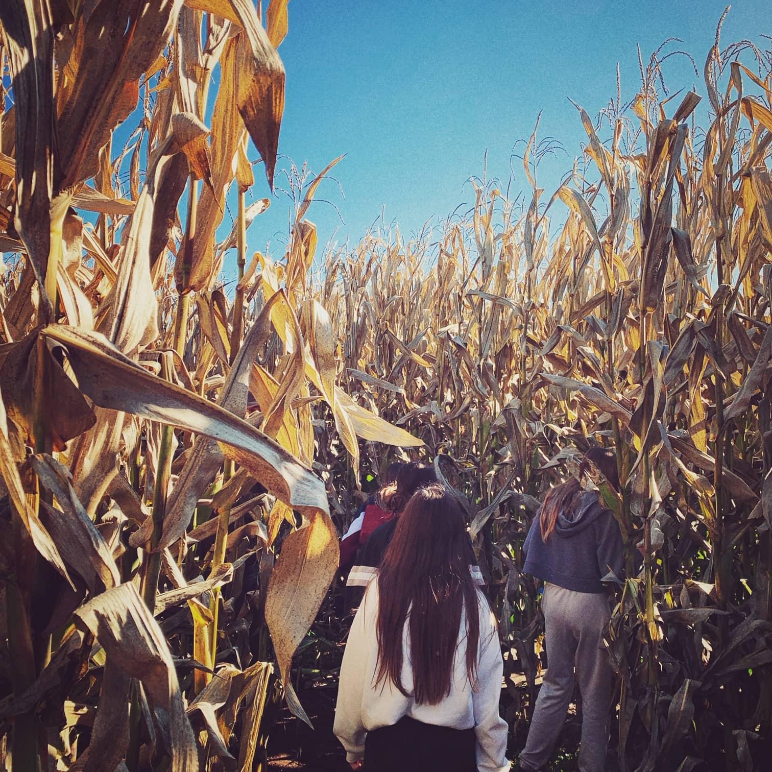 Corn Maze at Carpinito Farms