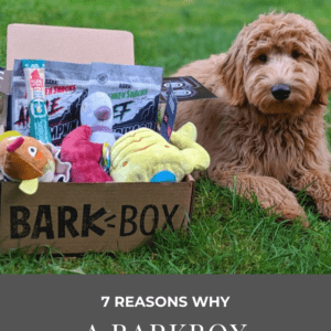 7 Reasons A BarkBox Subscription is Worth the $$