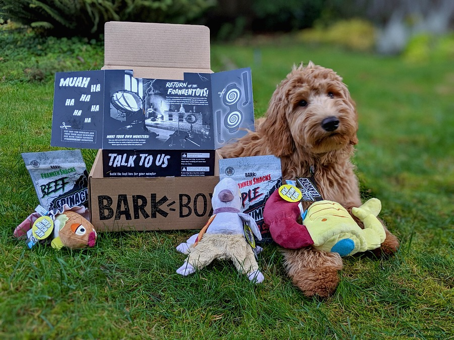 Barkbox Halloween Box with Goldendoodle Puppy