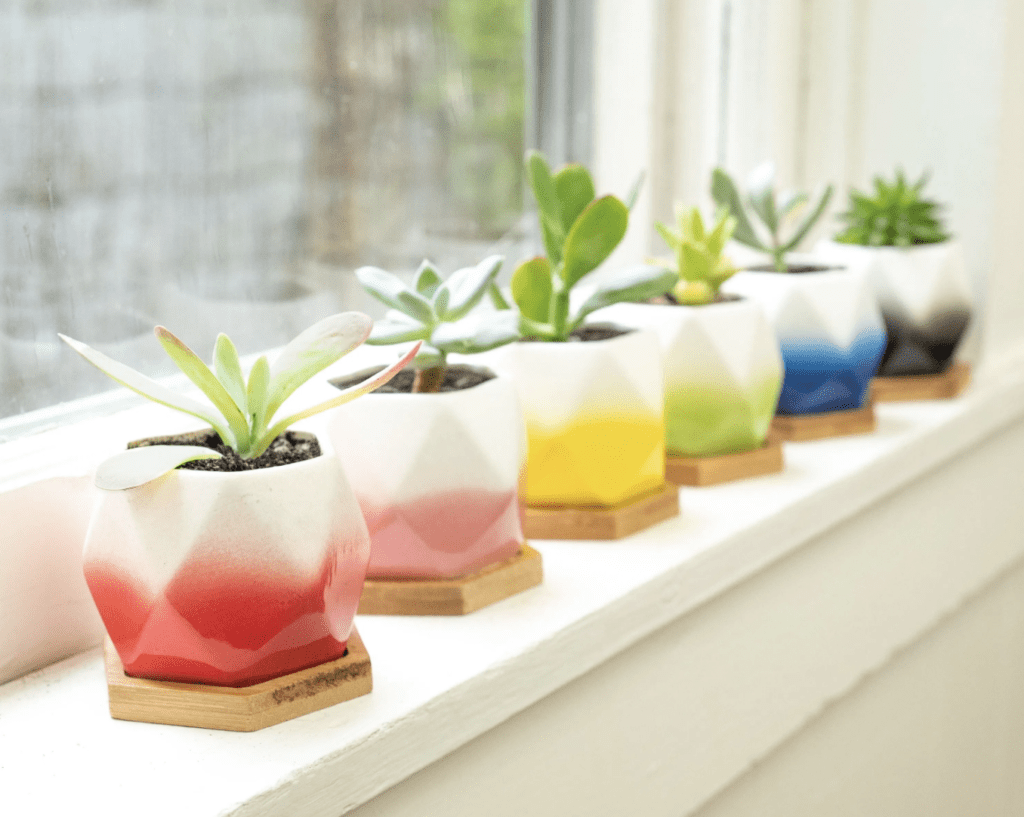 Succulent Subscription Box – $10 for First Month + Free Shipping!