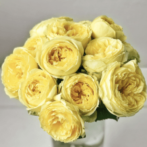 Yellow Roses from Rose Farmers