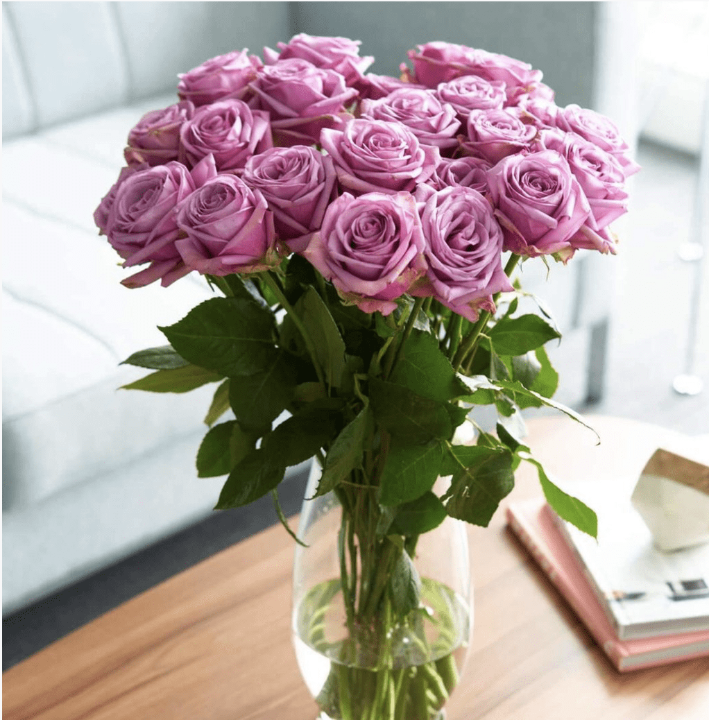 Purple Attraction Roses