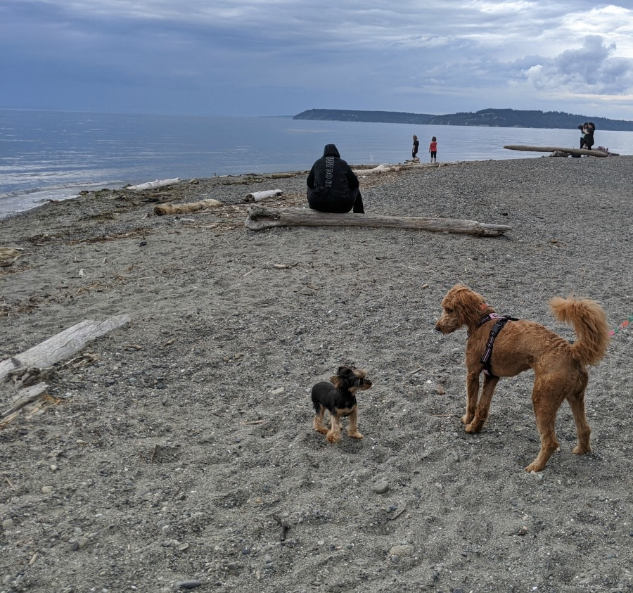 Meadowdale Beach with Dogs