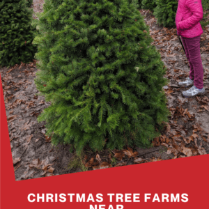 Christmas Tree Farms near Seattle & Tacoma & Puget Sound areas