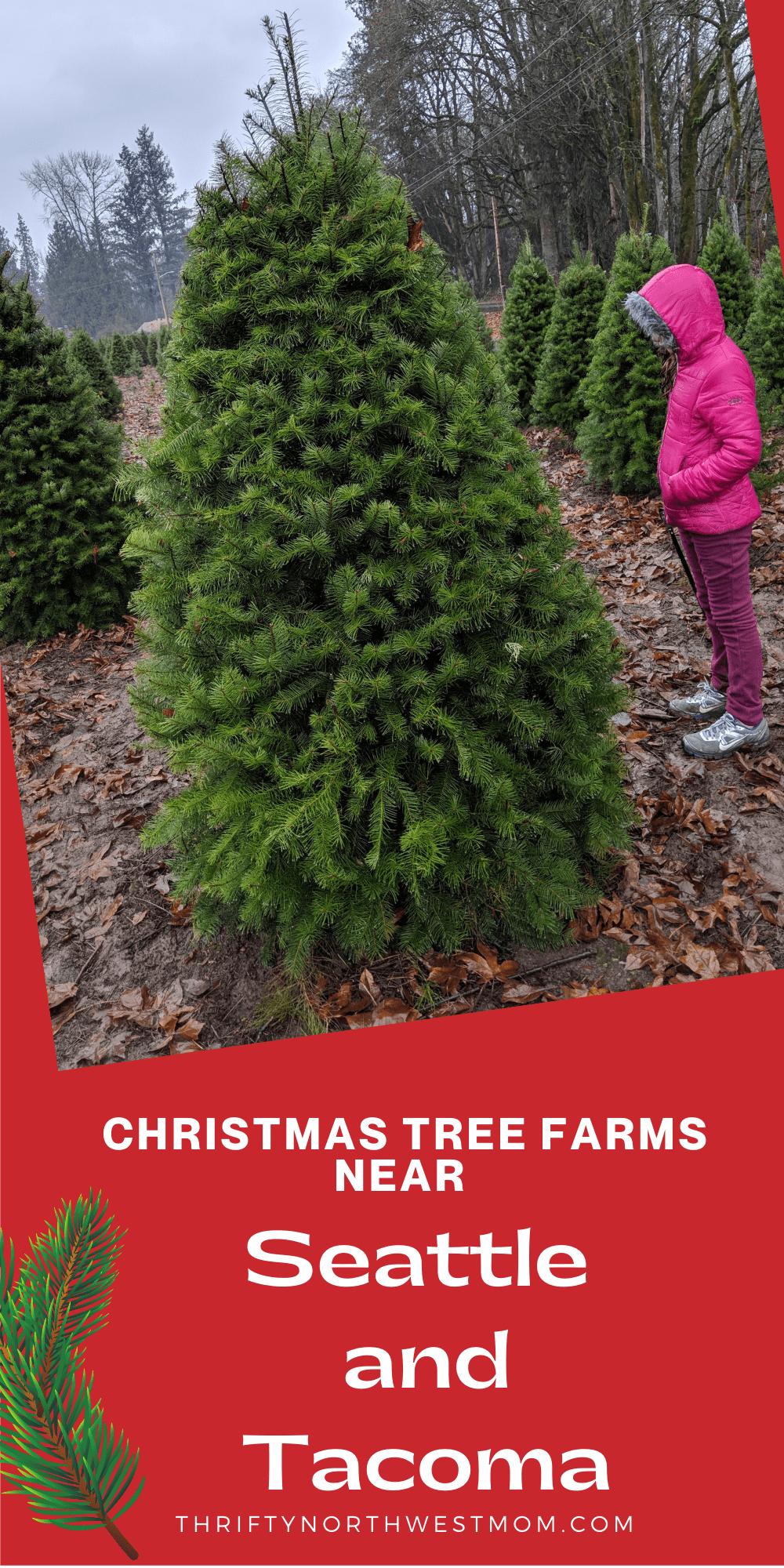 Christmas Tree Farms near Seattle & Tacoma & Puget Sound areas