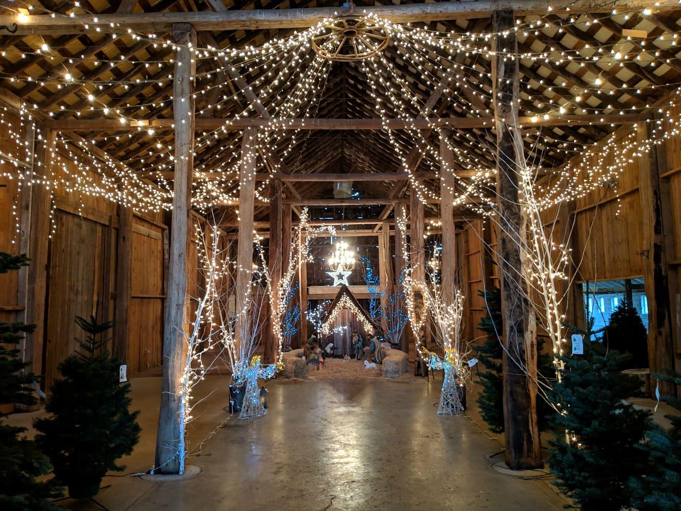 Nativity at Schilter Farms