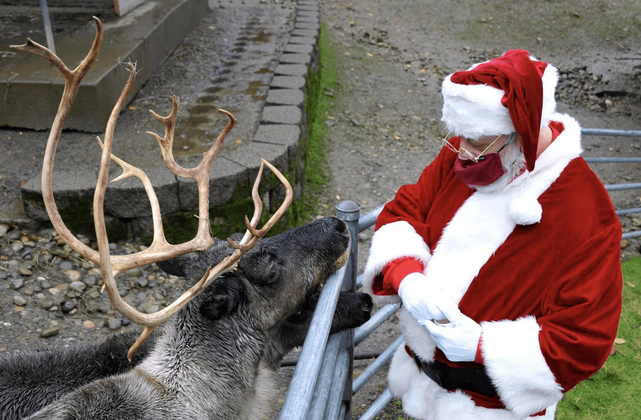 Issaquah Reindeer Festival