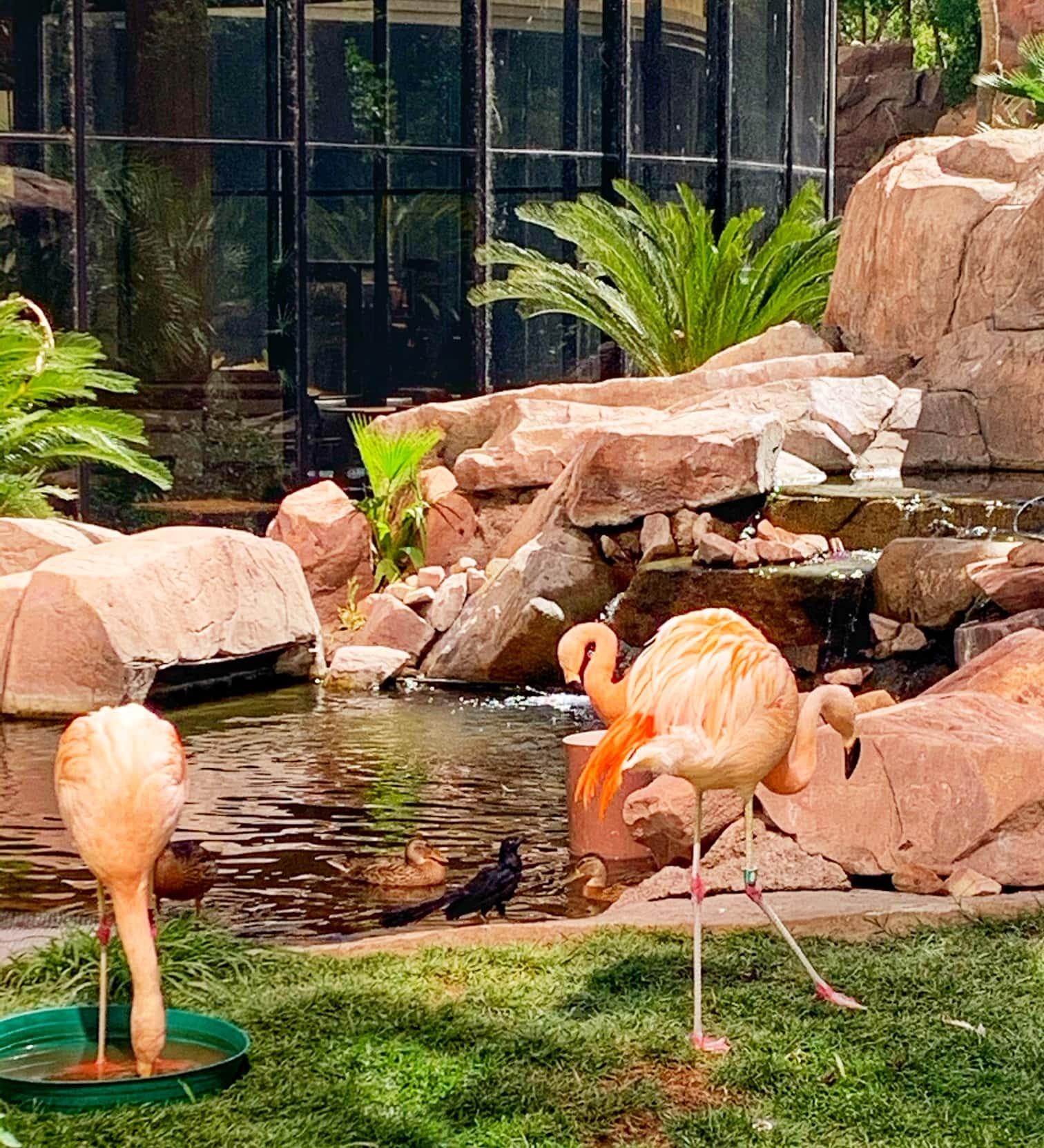 flamingos outdoor wildlife habitat las vegas