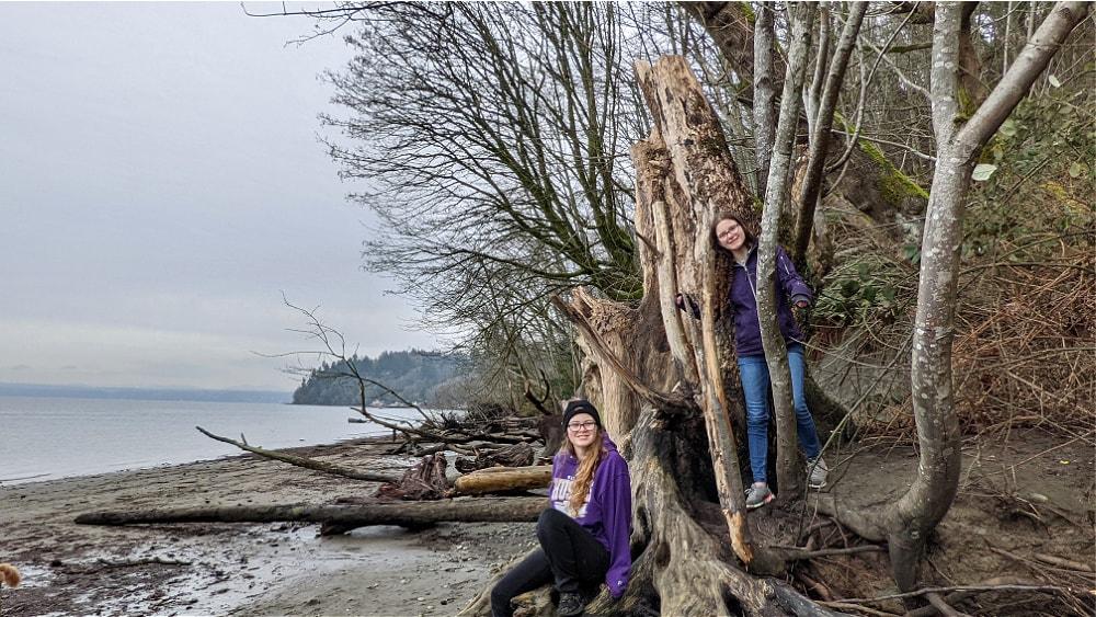 Dash Point Beach & Driftwood