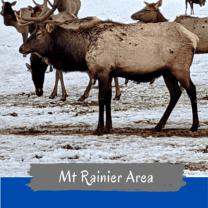 Elk & Bighorn Sheep Feeding Areas