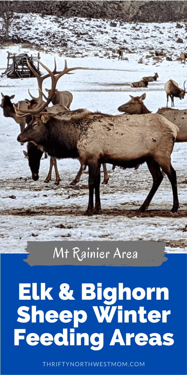 Elk & Bighorn Sheep Feeding Areas
