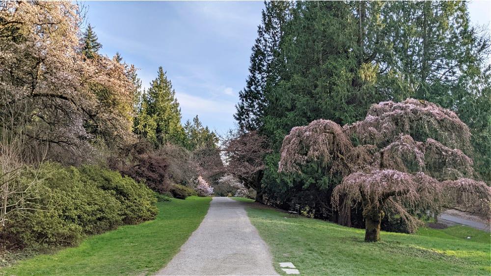 Washington Park Arboretum Walking Path