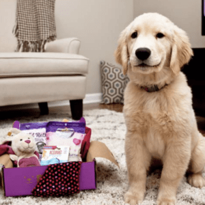 PupBox Subscription Box for dogs