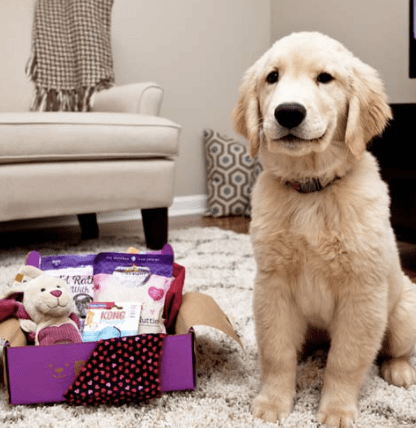 PupBox – 50% off Promo Code for this Subscription Box for Dogs!