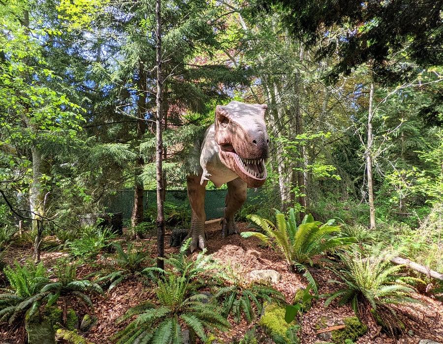Tyrannosaurus Rex at Dino Exhibit