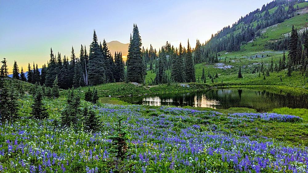 Wildflowers at Naches Peak Trail